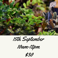 Increase diversity plant an insectary event 15th September 2019 10am-12pm Kaipatiki Project hub